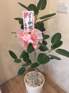 OPEN記念の花